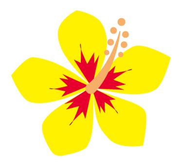 Flower - Hibiscus-08