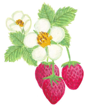 Strawberry and flower