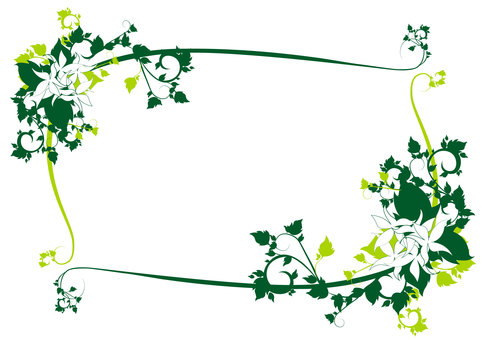 Vines and white flower frame