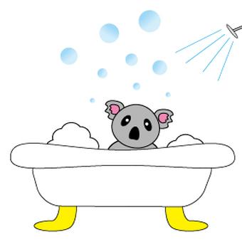 Koala washing