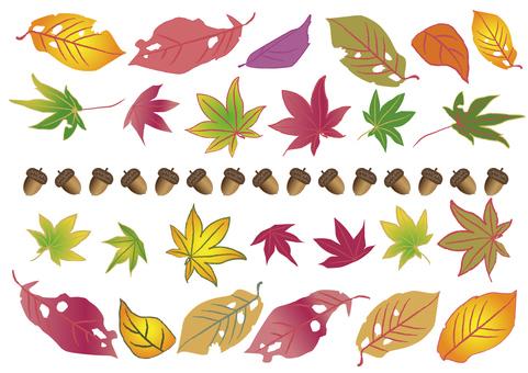 Autumn_ colorful fallen leaves & amp; acorns