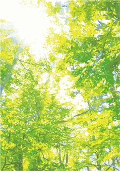 숲의 텍스처 07