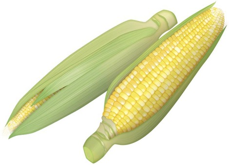 Maize 3 / Vegetable