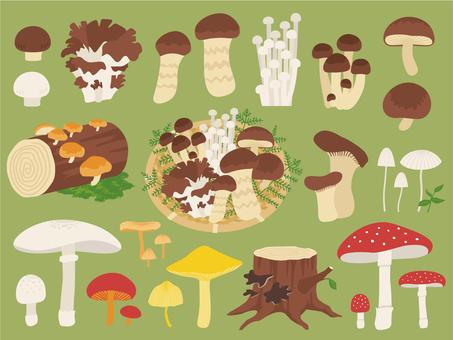 Mushroom summary