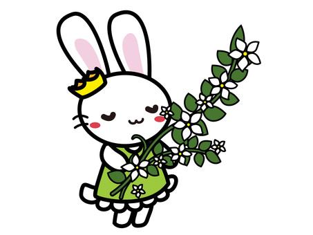 Aroma Usako (Jasmine)