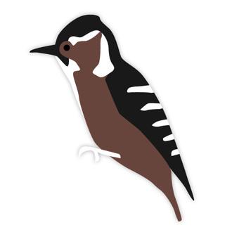 Kogera (familiar bird)