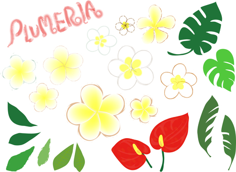 Set of Hawaiian flowers