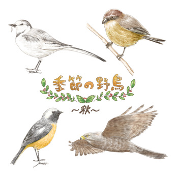 Seasonal wild birds ~ fall ~