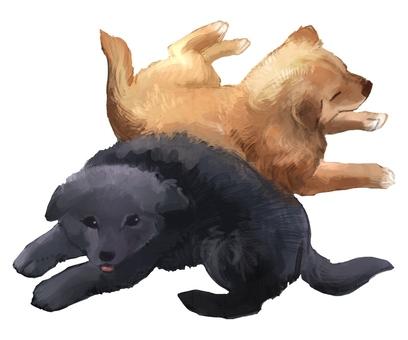 2 마리의 강아지