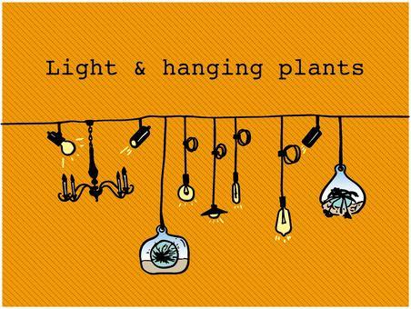 Light_plants