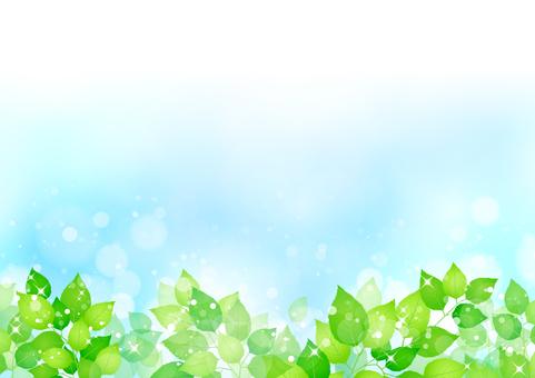 Fresh green 268