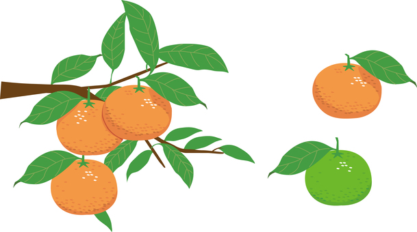 Tangerines with branches