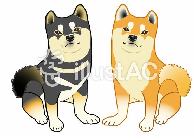 柴犬ペアのイラストのイラスト