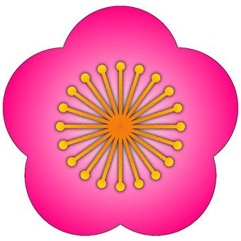 매화 (핑크)