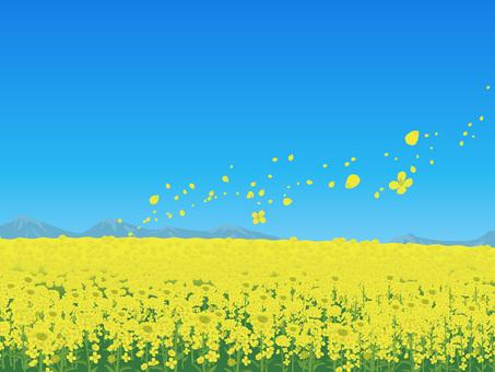 Rape flower's landscape Landscape 03