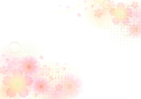 Cherry blossoms 127