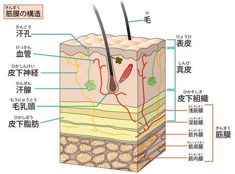 Fascia structure