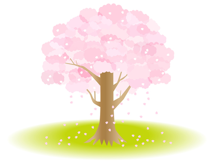 Cherry blossoms 03