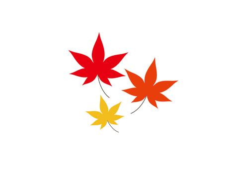 3 color maple