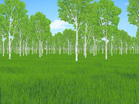 meadow (grove)