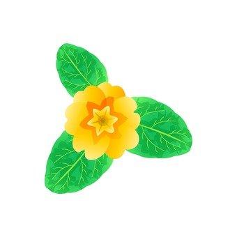 Yellow Sasanqua