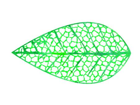 Skeleton leaf _ single item 1