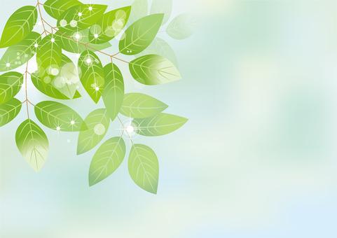 Glittering leaves & sky 9