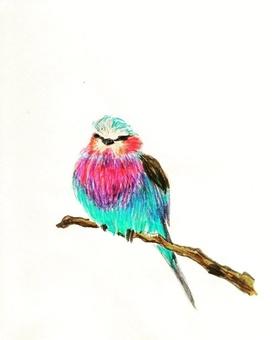 Mr. 小鳥