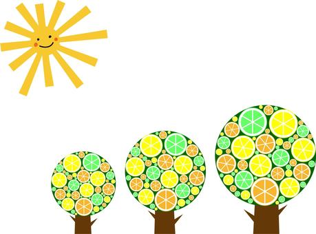 Omasama and citrus tree