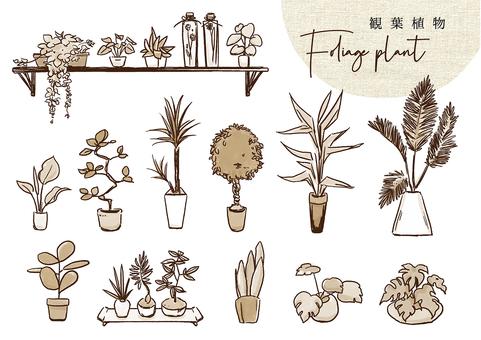 Houseplant monotone