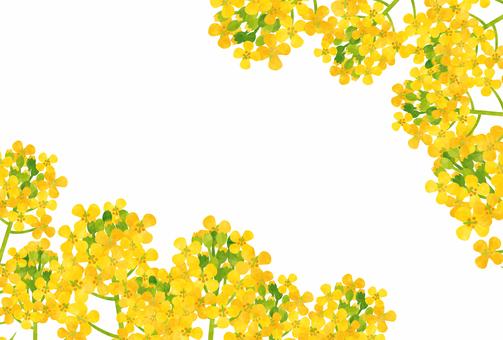 Spring / Rape blossoms