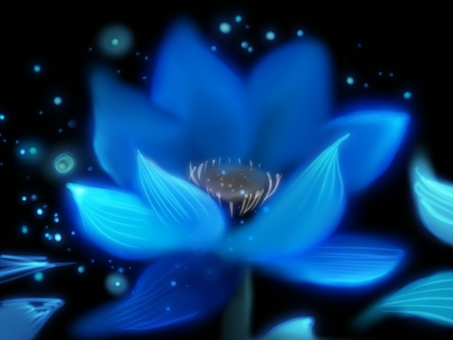 Lotus flower night