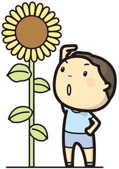 小學生向日葵和回比較