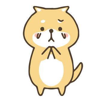 Cute hand drawn shiba inu / crying / sad
