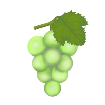 Muscat with leaves (no contour)