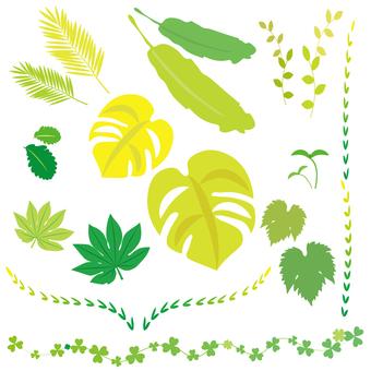 잎의 세트