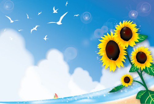 Sunflower in blue sky, sea and seagull