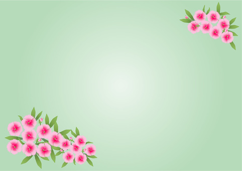 패랭이 꽃 벽지