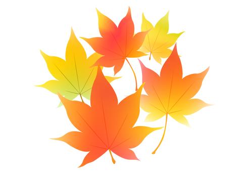 Fall image material 4
