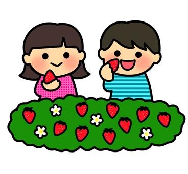 草莓採摘2(顏色)