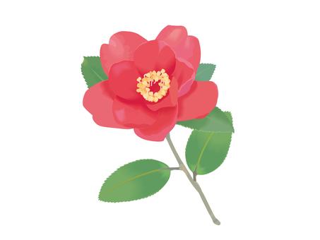 Red camellia 1