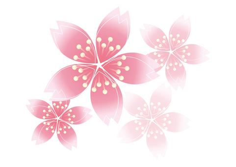 Sakura Sakura 3