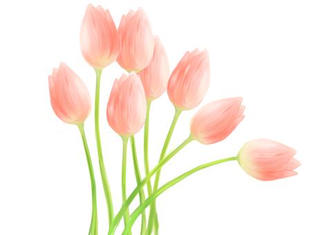 Tulip ②