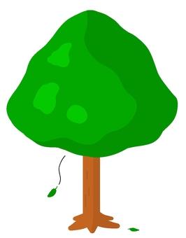 Evergreen broadleaf
