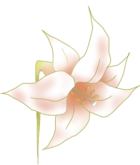 Pinkish white lily Ⅱ