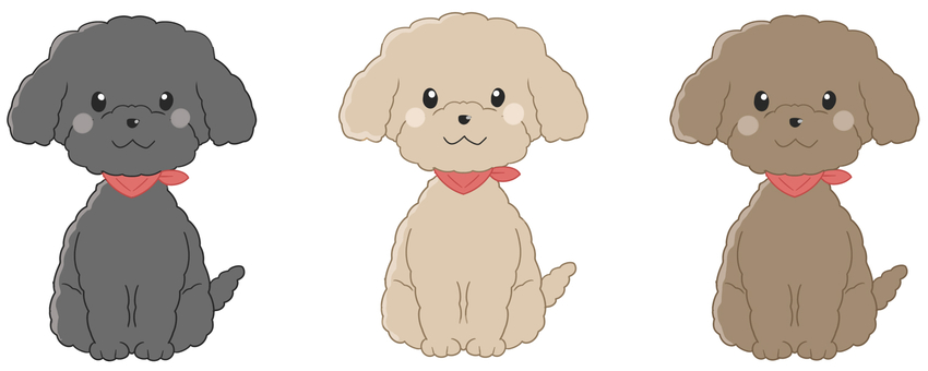 Toy poodle sitting