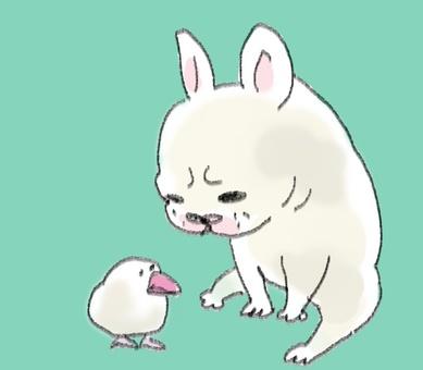 Bungo and French Bulldog