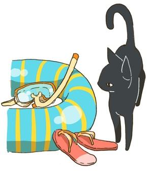 Pool and black cat