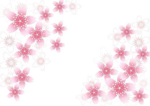 벚꽃의 꽃 31