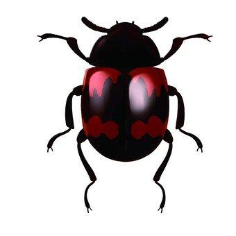 Scarab bug 3